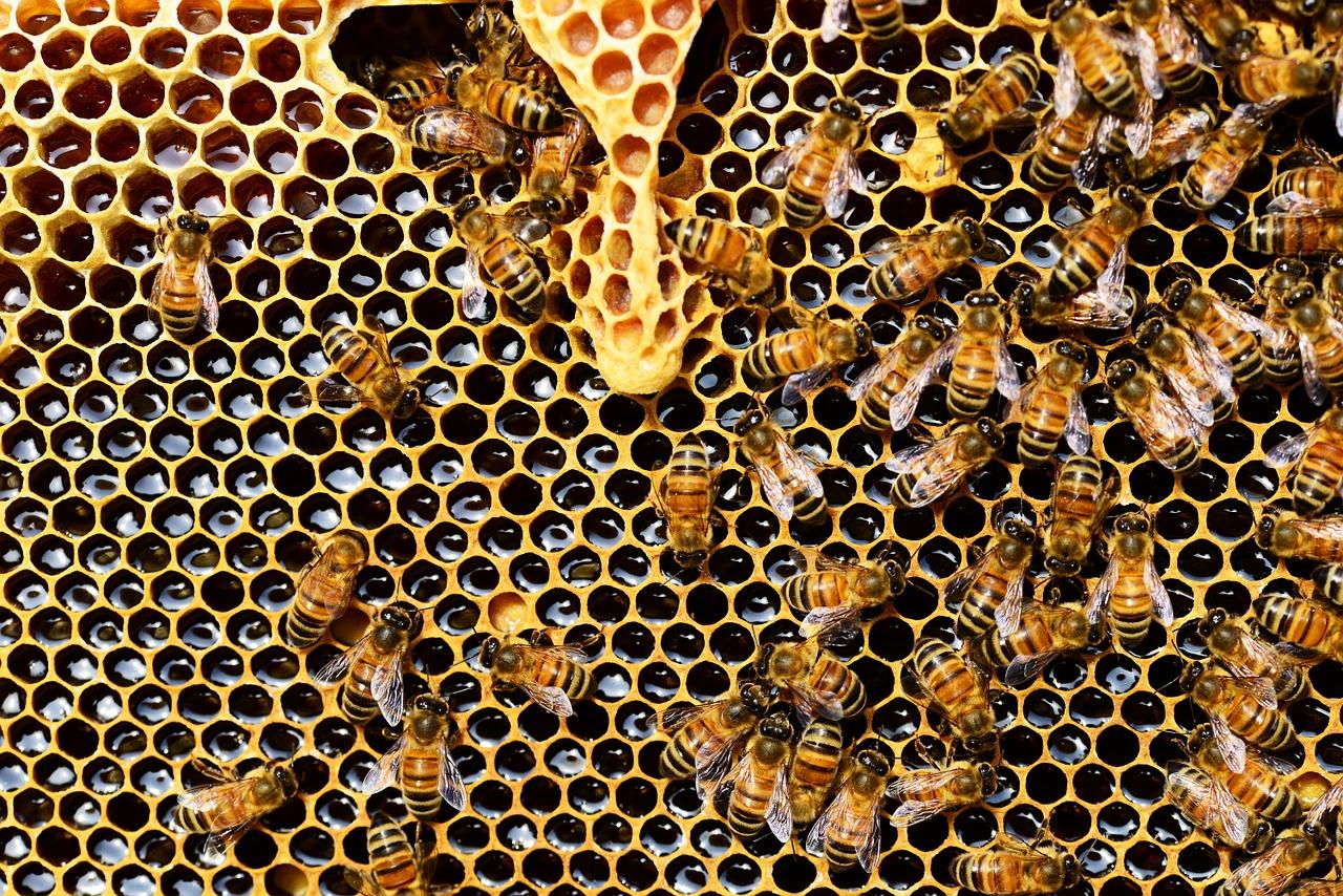 imagen-articulo-de-miel-dentro